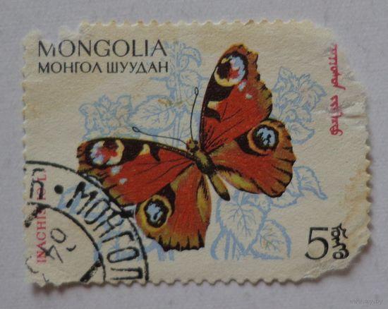 Монголия.бабочка