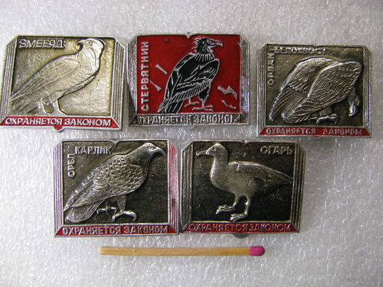 Значки. Охранаяется законом. Змееяд, Стервятник, Орлан-белохвост, Орёл-карлик, Огарь. цена за 1 шт.