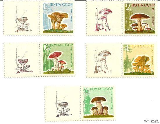 Грибы серия 5 марок с купонами негаш. 1964 СССР
