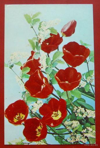 Композиция из цветов. Чистая. 1983 года. Костенко. #28.