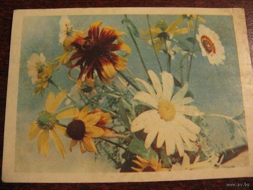 Цветы 1965г.