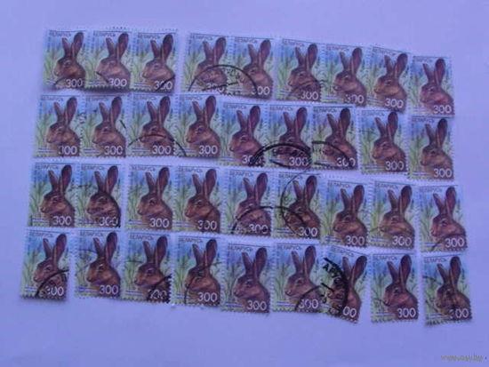 Беларусь марки 2008г Заяц-русак распродажа