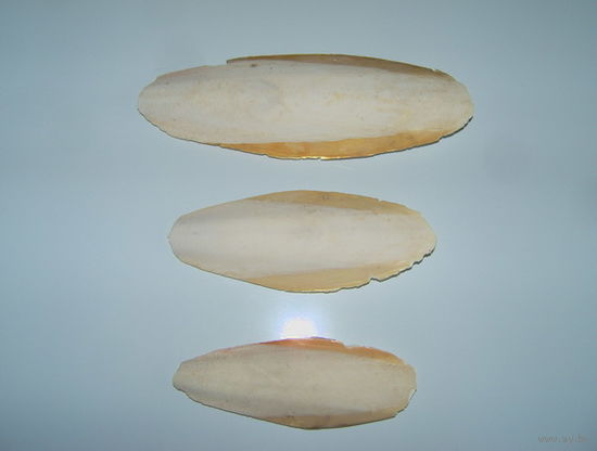 Сепия (панцирь каракатицы) для питания попугаев, улиток и черепах. Натуральный источник кальция и минералов. Распродажа!