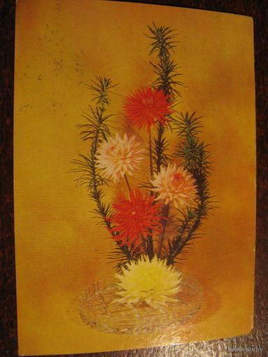 Цветы 1983г.